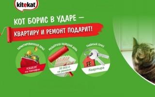 Акция KiteKat «Квартира и ремонт от кота Бориса» — регистрация чека в личном кабинете